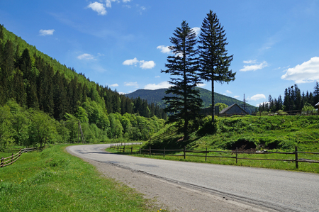 carpathians: The road stretches among the mountain forests of the Ukrainian Carpathians