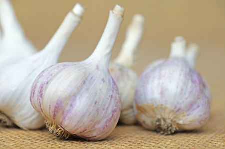 asian flavors: Garlic is ready to eat. Garlic is isolated on the background of the bag
