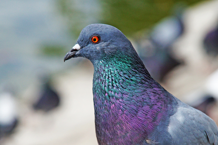 beak pigeon: Pigeons among the cityscape. Pigeons are sitting in the city park.