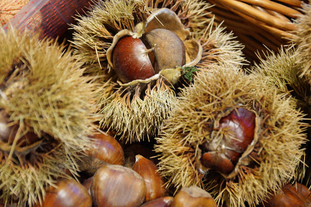 Sweet chestnuts. A lot of chestnuts in the peel. Stock Photo