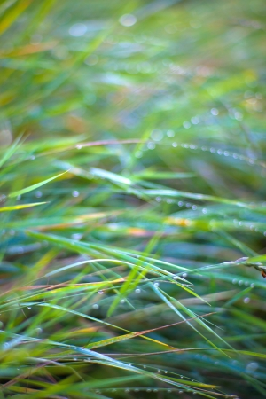 faerie: green fresh grass with faerie lens flare Stock Photo