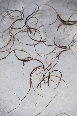 peruke: Hair Clippings strand on the floor at the hairdresser salon for use as texture or background. Stock Photo