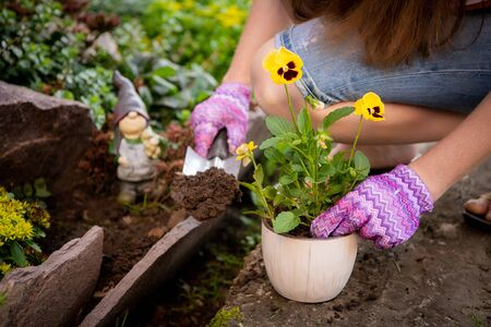 Womans hands planting yellow flowers in the garden