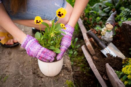 Woman's hands planting yellow flowers in the garden. Stockfoto