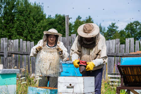 Man in a protective suit beekeeper uses device for smoke fumigation to calm bees in hives and check honey harvest in honeycomb Imagens