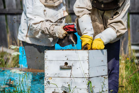Eco apiculture and honey production business. Beekeeper fumigating bees with smoke to remove honeycombs from the apiary houses. Beepeeking process.