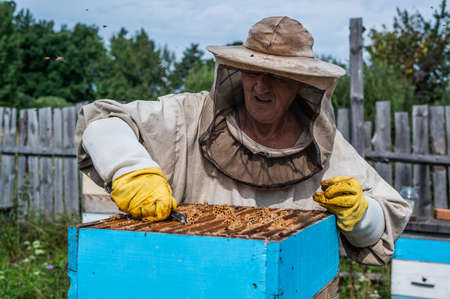Close up shot of a beehive being opened with a metallic tool by beekeeper.