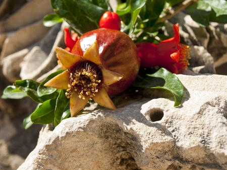 Pomegranate flower in the ruins photo
