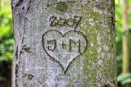Heart with monograms carved in a tree trunk
