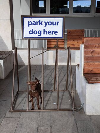"""Brown dog sitting on a bicycle rack, sign saying """"park your dog here"""""""