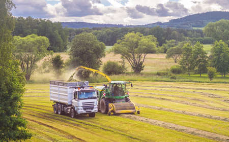 Self-Propelled forage harvester and silage truck in the field