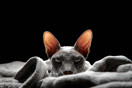 Creepy sphinx on black background.