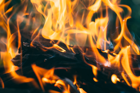 Closeup of firewood burning in fire outdoor