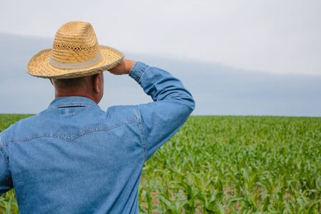 Senior farmer with straw hat stands in the field and looks into distance at young corn field Banco de Imagens