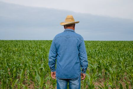 Man in denim shirt and straw hat standing in the young corn field examing crop
