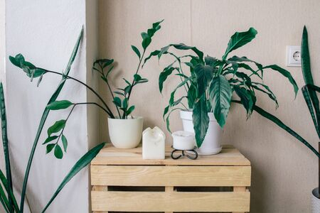 Scandinavian room interior with shelf and beautiful houseplants and accessories on it. Banco de Imagens