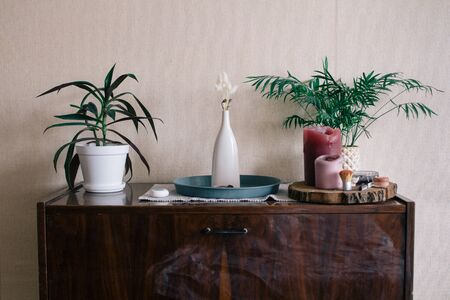Stylish green plants in pots and accessories on wooden vintage dresser Banco de Imagens