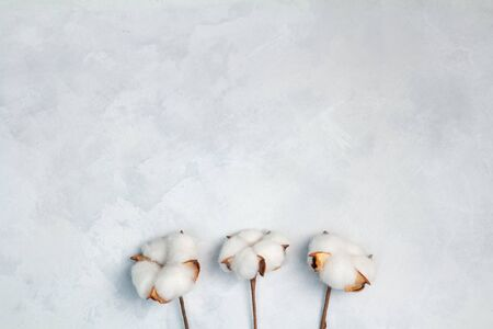 Cotton flowers on white concrete background, copy space, space for text and logo. Top view, flat lay. Banco de Imagens