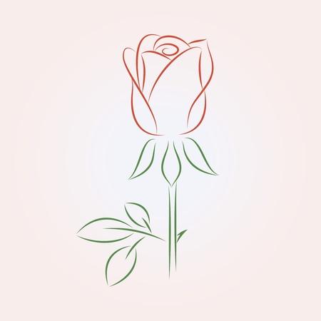 lineas verticales: ilustraci�n de una rosa