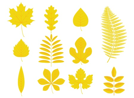 fern leaf: illustration of autumn leaves