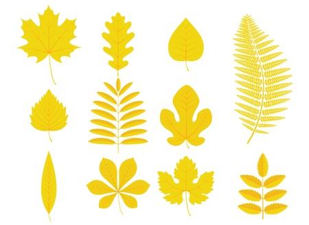 helechos: ilustración de las hojas de otoño