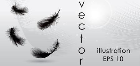 black plumage: Vector illustration background Illustration
