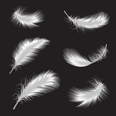 vector illustratie van veren Stock Illustratie