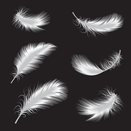 feather quill: vector illustration of feather