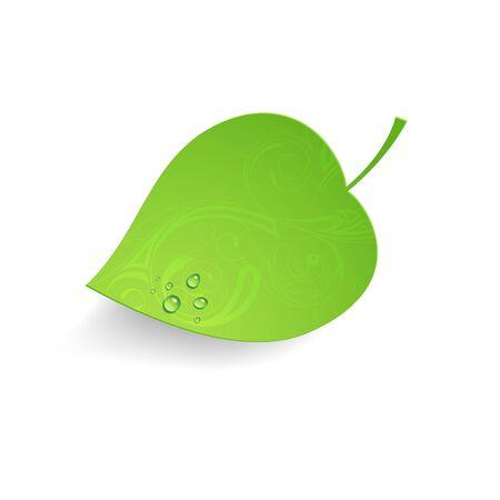 leaf water drop: Vector illustration of a fallen leaf Illustration