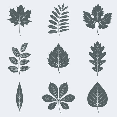 Vector illustration of silhouettes of leaves
