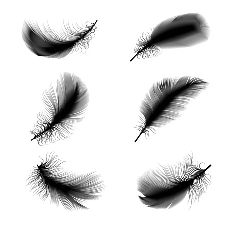 Vector illustration of bird feathers Çizim