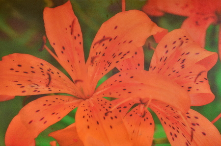 mouse pad: Mouse pad with flower background. Closeup with blurry effect. Stock Photo