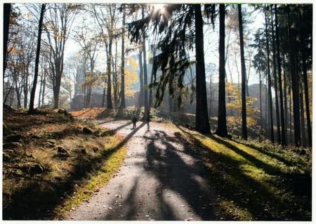 THE CZECHOSLOVAK REPUBLIC - CIRCA 1990s: Retro photo shows autumn landscape (forrest). Fall trip. Vintage color photography. Editorial