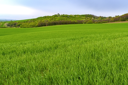 Green fields in South Moravia, Czech Republic. Waves hills with green grass, rolling fields. Moravian Tuscany. Stock Photo