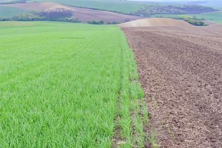 Green fields in South Moravia, Czech Republic. Waves hills with green grass, rolling fields. Moravian Tuscany. Reklamní fotografie