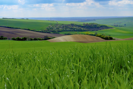 moravia: Wavy spring fields in South Moravia. Moravian Tuscany, South Moravia, Czech Republic.