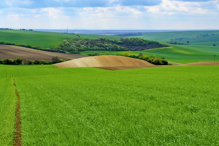 Wavy spring fields in South Moravia. Moravian Tuscany, South Moravia, Czech Republic.