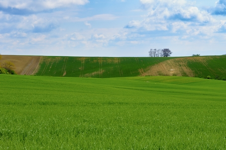 Lines and waves with trees in area known as Moravian Tuscany, South Moravia, Czech Republic.