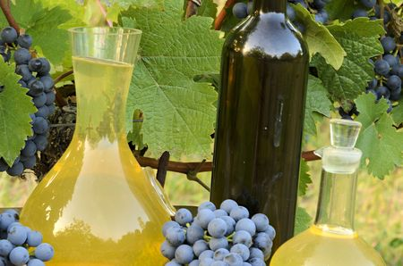White wine in carafe and red wine in bottle on vineyard background.