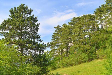 The Pavlov Hills, in Czech also Palava.  White limestone rocks,  flowers in rock. South Moravia, the Czech Republic, Europe