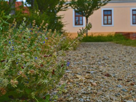 Urban gravel path. Soft colors. Flowers and building on background. Selective focus Stock fotó - 103291760