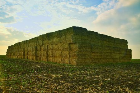 A stack of straw bales on harvested field. Agricultural concept Stockfoto
