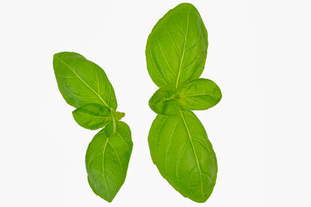 Fresh basil leaves isolated on a white background with path and full depth of field. Top view with copy space for your text. Flat lay Standard-Bild