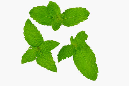 Mint leaves. Fresh mint on white background. Mint leaves isolated. Fresh mint leaves isolated on a white background with path and full depth of field. Top view with copy space for your text. Flat lay. Standard-Bild