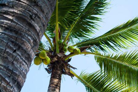 Photo de palmiers et de ciel bleu. Noix de coco Le concept de voyage tropical. Mise au point sélective. Banque d'images - 91696371