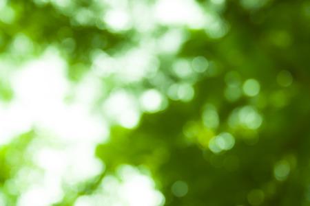 Arbres flou avec des nuages ? ? sur la forêt. fond de paysage. l & # 39 ; été Banque d'images - 91355856