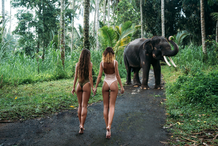 Two young womans turn back to camera with ass, elephant on background near forest. Beautiful girl model with fit body posing in white and green swimsuit. Concept of zoo, tropical photoshoot Stockfoto