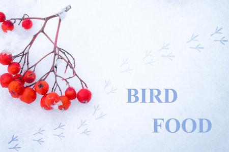 Bird Food inscription and bird tracks with red rowan berry branch on background, bird winter feeding theme Stock Photo