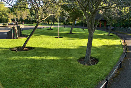 Beautiful mulch tree circles on the lawn in St. Stephen's Green Park in the autumnal morning, Dublin, Ireland