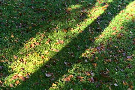 Tree trunk shadow fallen on the grass with autumn orange leaves. Beautiful diagonal autumnal background. Marlay Park, Dublin, Ireland 免版税图像